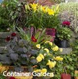 plant a container garden