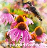 plant a hummingbird garden