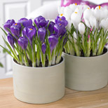 bulbs for patio containers