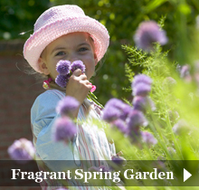 fragrant spring garden bulbs